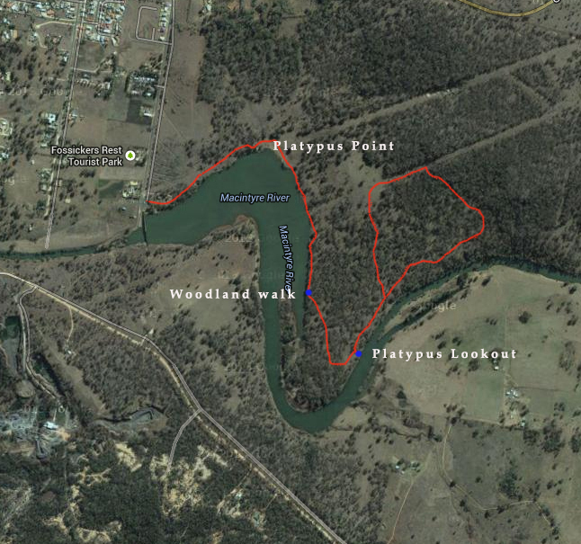 Woodland Walk - Platypus Lookout circuit - Lake Inverell